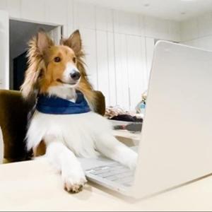 【特輯】居家上班「擼狗吸貓」超幸福?小心毛孩壓力大到生病!