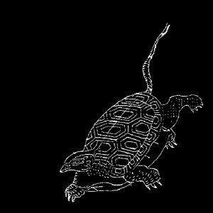 (試播集)三足鱉