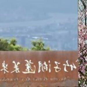 花團錦簇朵朵開 蓬萊在來都不錯