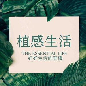 【植物筆記】#01:沉香,高貴神秘的百香之王 ft.貝貝
